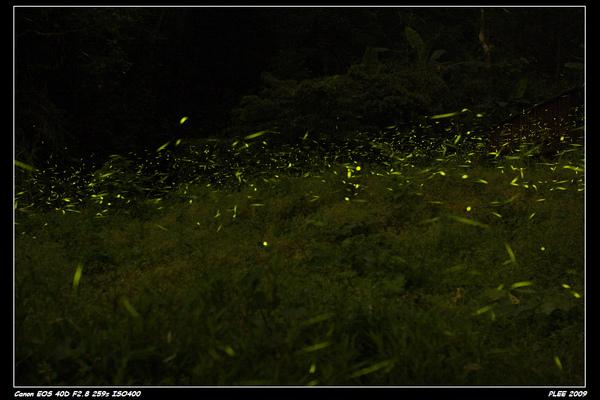 Firefly_02.jpg