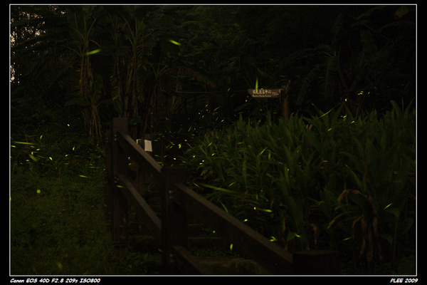 Firefly_03.jpg