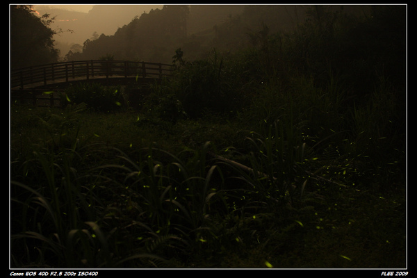 Firefly_06.jpg