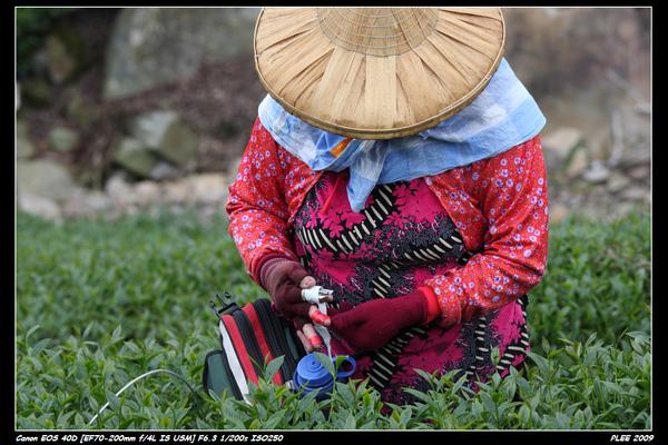Alishan Tea Garden_11.jpg