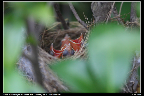 Bird hatch_03.jpg