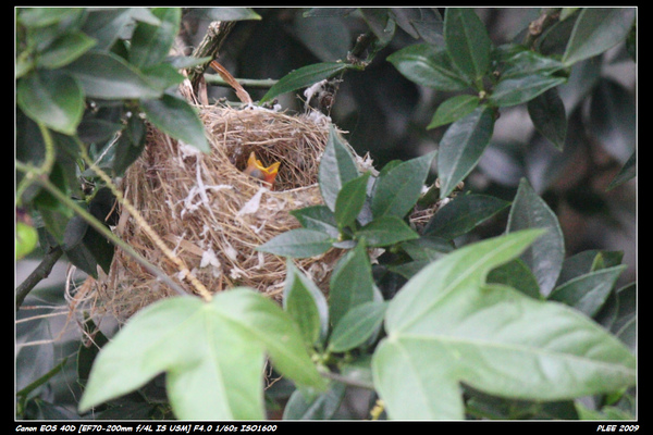 Bird hatch_08.jpg