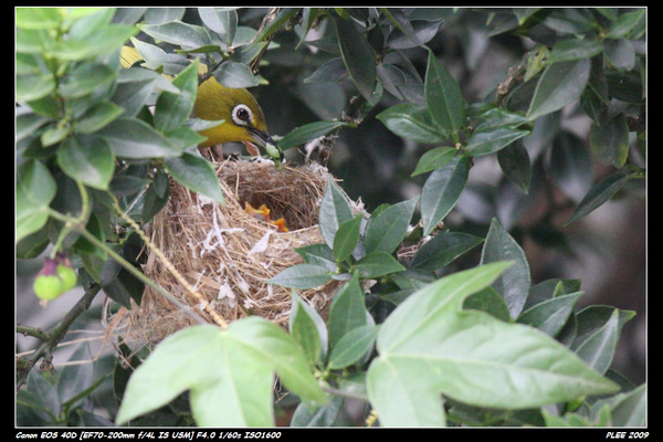 Bird hatch_09.jpg