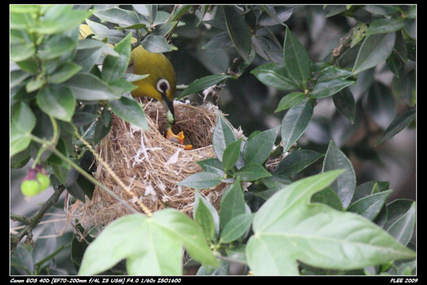 Bird hatch_10.jpg