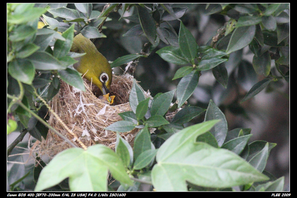 Bird hatch_12.jpg