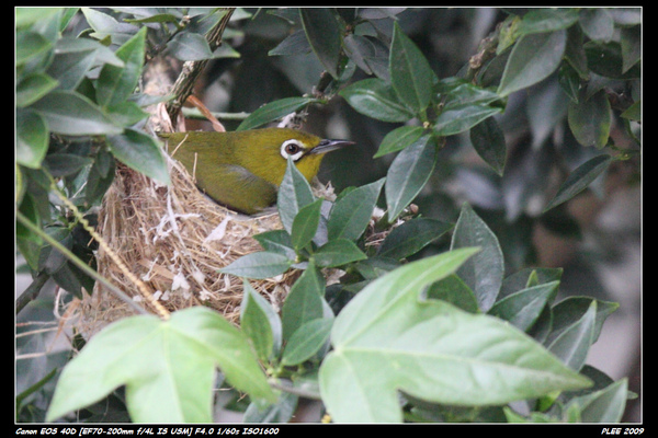 Bird hatch_15.jpg
