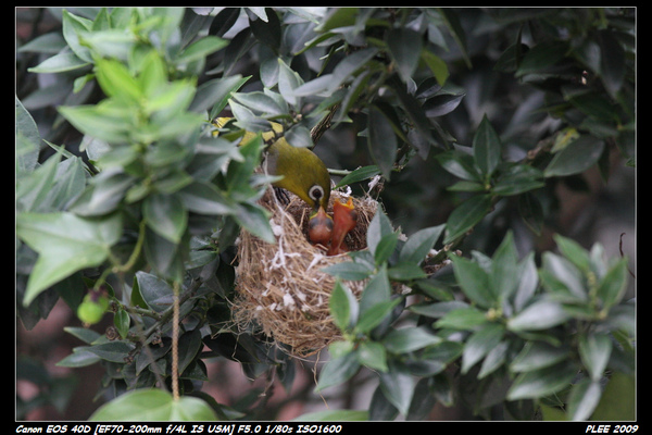 Bird hatch2_03.jpg