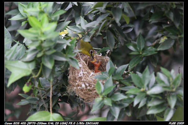Bird hatch2_15.jpg