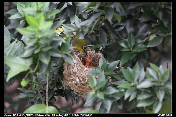 Bird hatch2_18.jpg