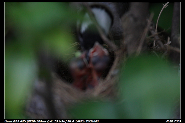 Bird hatch2_21.jpg