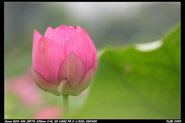 Lotus_03.jpg