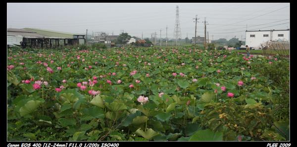 Lotus_15.jpg