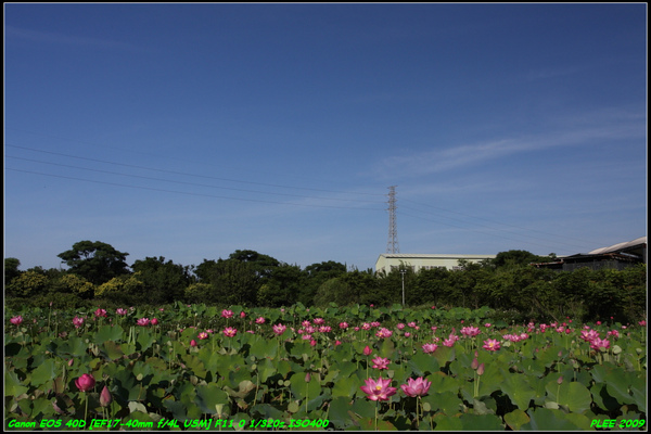 Lotus2_21.jpg