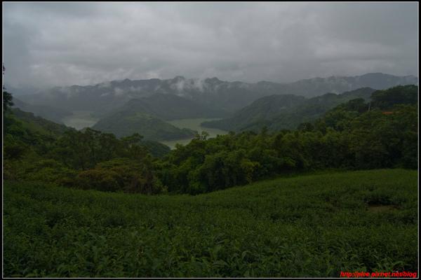 Tea garden_4.jpg