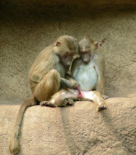 """阿猴兄~""""~你在軋麻阿 >""""<"""