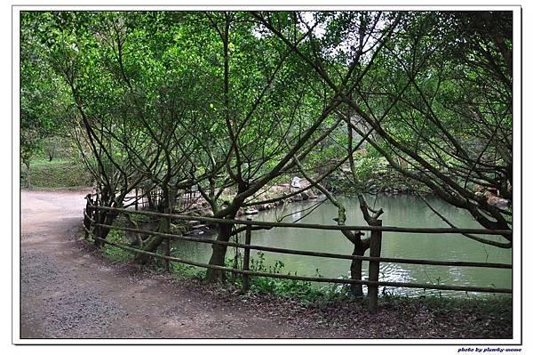 綠葉方舟 (24)