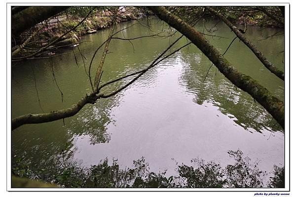 綠葉方舟 (25)