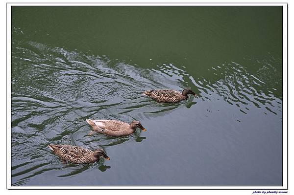 綠葉方舟 (30)