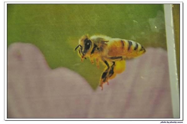 紙箱王蜜蜂故事館 (31)