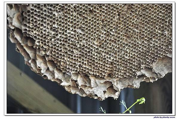 紙箱王蜜蜂故事館 (33)