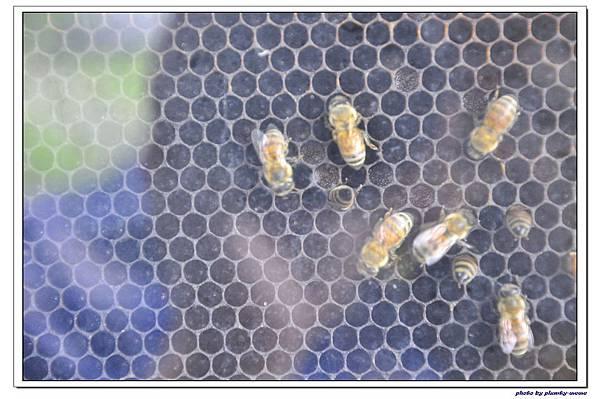紙箱王蜜蜂故事館 (35)