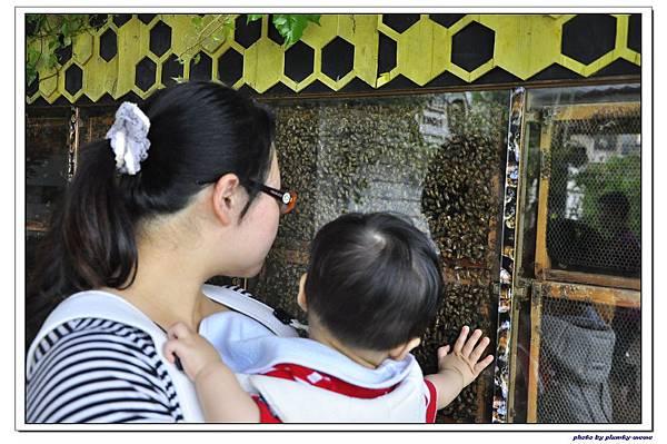 紙箱王蜜蜂故事館 (36)