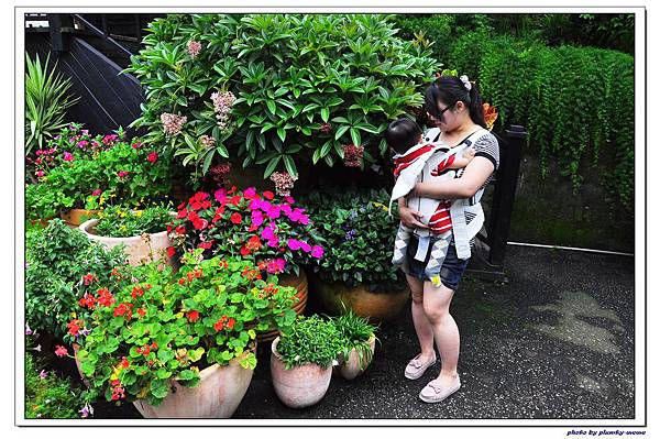 台中薰衣草森林 (16)