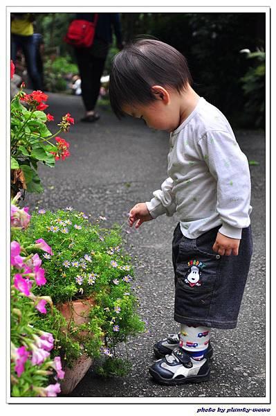 台中薰衣草森林 (68)