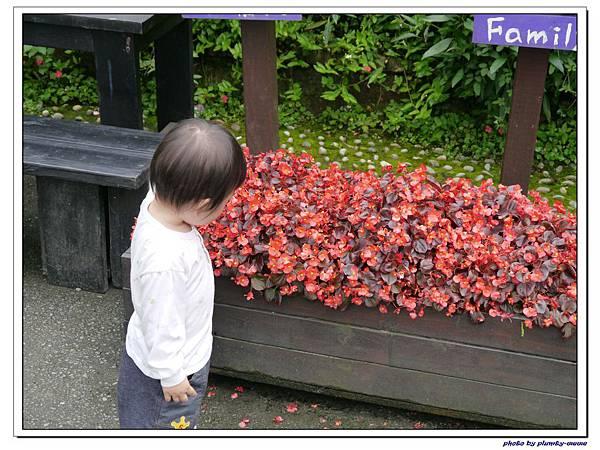 台中薰衣草森林 (81)
