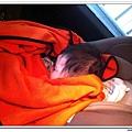 汽座頭枕 (3)