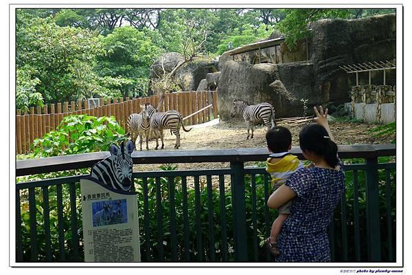 壽山動物園 (72)