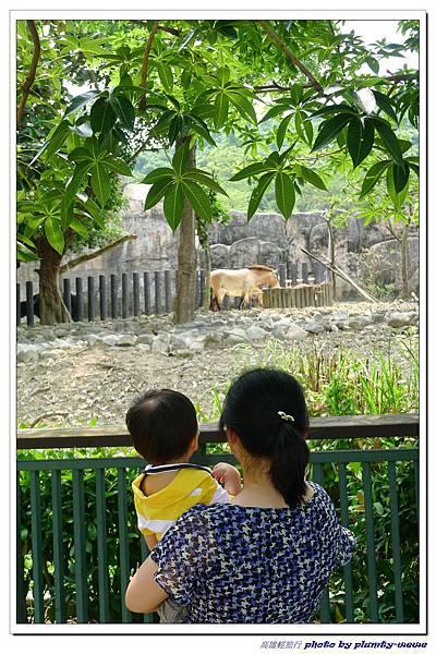 壽山動物園 (77)