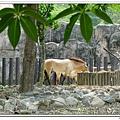 壽山動物園 (78)