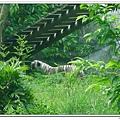 壽山動物園 (79)