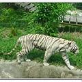 壽山動物園 (80)