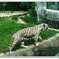 壽山動物園 (81)