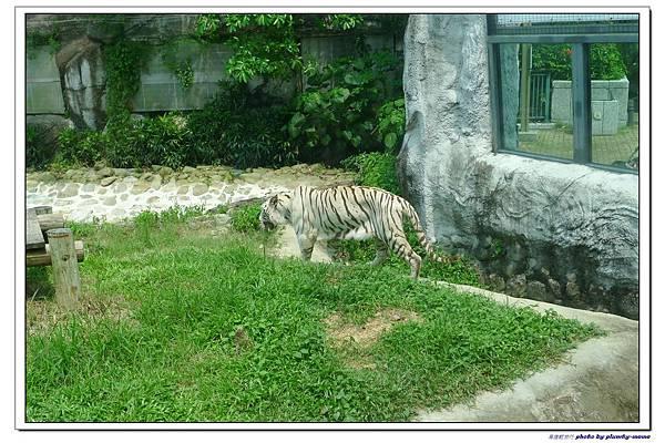 壽山動物園 (82)