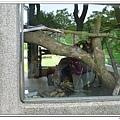 壽山動物園 (26)