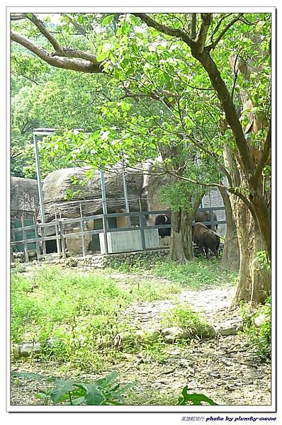 壽山動物園 (92)