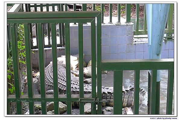 壽山動物園 (93)