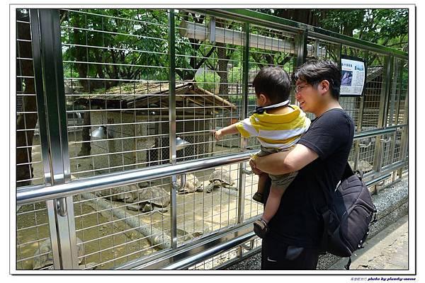 壽山動物園 (35)