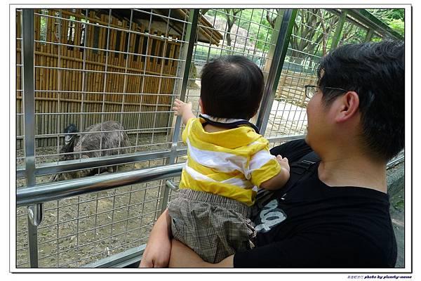 壽山動物園 (36)