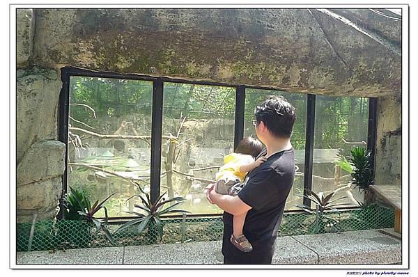 壽山動物園 (98)