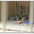 壽山動物園 (41)