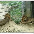 壽山動物園 (44)