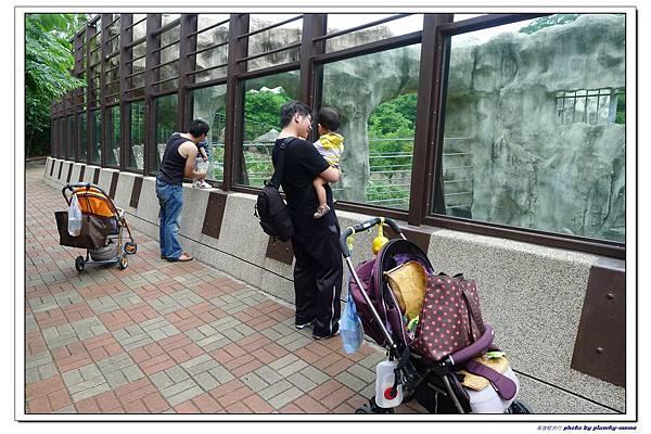 壽山動物園 (46)