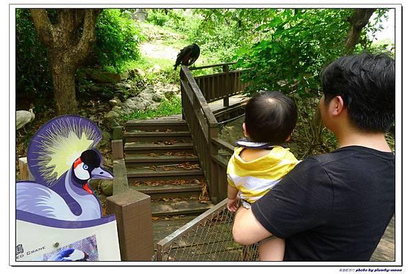 壽山動物園 (51)
