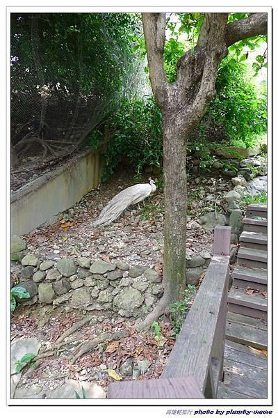 壽山動物園 (52)