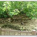 壽山動物園 (55)