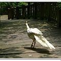 壽山動物園 (57)